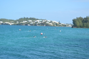 Harrington Sound swim